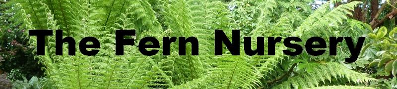Fern Nursery